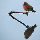 Vermilion Flycatcher (Reflections of Tranquility)  by Kimberly P-Chadwick