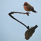 Vermilion Flycatcher (Reflections of Tranquility)  by Kimberly Chadwick