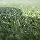 Water droplets on grass by Cameron Hicks
