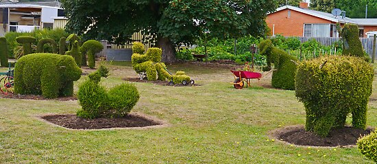 Topiary, Railton, Tasmania, Australia (panorama) by Margaret  Hyde