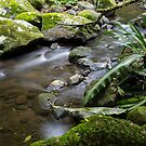 Peaceful Creek by Andrew Durick