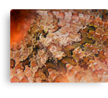 Reef Art - Scorpionfish Fin Canvas Print