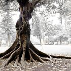 Firmly Rooted by Adam Le Good
