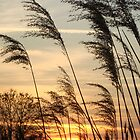 Reeds by Alex & Louise Martin