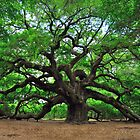 Angel Oak by Tom Baker