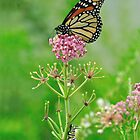 Someday - Monarch Butterfly and Caterpillar by Tom Baker