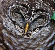 Barred Owl Blues by Tom Baker