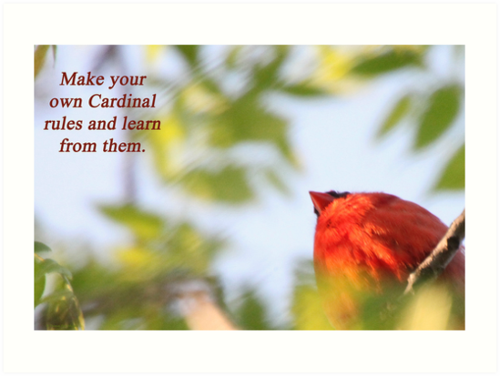 Make your own Cardinal rules and learn from them. by Thomas Murphy
