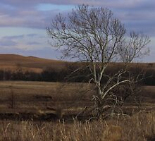 Flint Hills by Galen Obermeyer