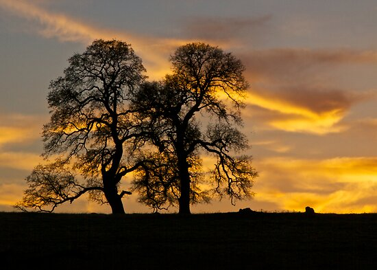 Two Oaks and Sunset by John Butler