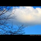 Tree Branches Against Winter Blue Sky  by © Sophie W. Smith