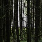 Old Forest by HuntrRose
