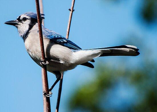 I Am A Pretty Bird!! by barnsis