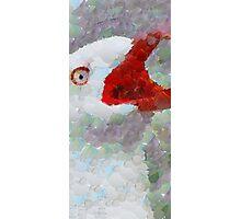 Albatross Photographic Print