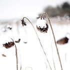 Snow... by SandrineBoutry