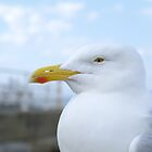 Seagull Up Close by Rob Page