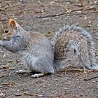 Squirrel I by Soniris