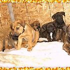 Eight pups (family) by Suzan Parrott
