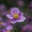 Nur eine Blume... by Jörg Holtermann