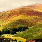 Find the Soul. Golden Hills of Wicklow. Ireland by JennyRainbow