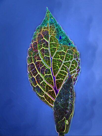 Hydrangea Leaf by Eileen McVey