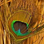 Peacock Feather 1 by d1373l