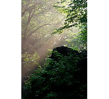 Sunshine Streaming Through The Forest Photographic Print