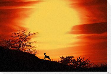 Red Deer Sunset by Pepijn Sauer