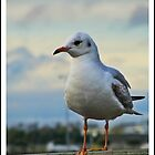 Seagull Perched by Dermot O'Mahony