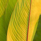 Yellow Leaf by Armando Martinez