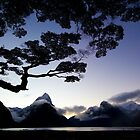 Milford Sound at dusk by Allyeska