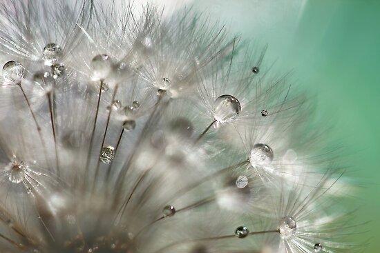 Silver Mint Dandelion by micklyn
