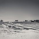 Snowy fields by Paul Richards