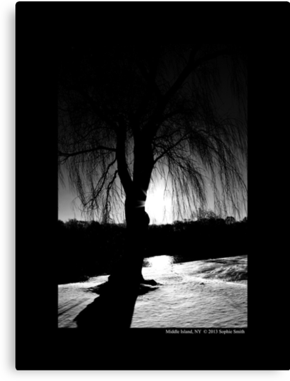 Salix Nigra - Black Willow Tree At Sunrise - Middle Island, New York  by © Sophie W. Smith