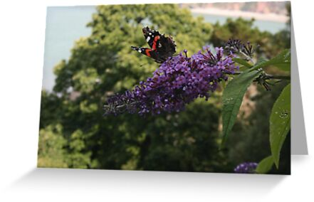 Red Admiral on rose bay willow herb flower  by Grace Johnson