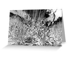 Horsetail #36 Greeting Card