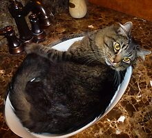 Rub-a-dub-dink my cat's in the sink! ©   by jansnow
