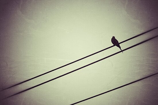 Bird on a wire by Kingstonshots