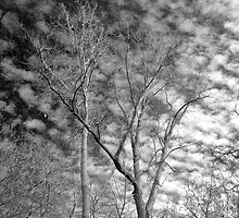 Trees with moon -  Ottawa National Wildlife Refuge by Mitch Labuda