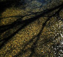 Submerged Shadow© by walela