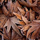 Bed of Leaves by Ursula Rodgers Photography