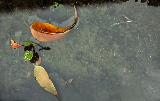 After the Rain...Puddles by heatherfriedman