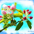 Apple Blossom by jkgiarratano