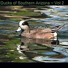 Ducks of Southern Arizona~ Vol 2  by Kimberly P-Chadwick