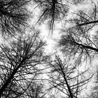 Vertical Fractal Trees by redfibres
