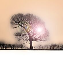 Winter Sunlight by DavidWHughes