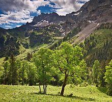 Alpine Light by Michael Breitung