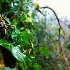 Ivy on the Tree by LivKelsey