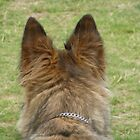 German shepherd ears by elsiebarge