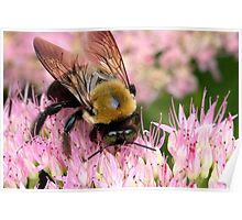 Stone Mountain Bumble Bee Poster